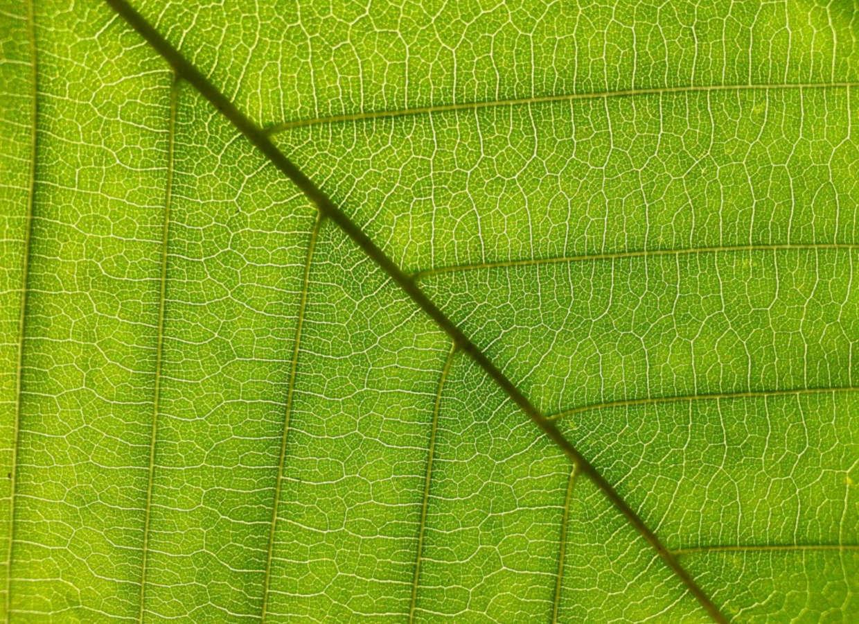 Une nouvelle technique d'analyse spectrale peut aider à stimuler la production végétale