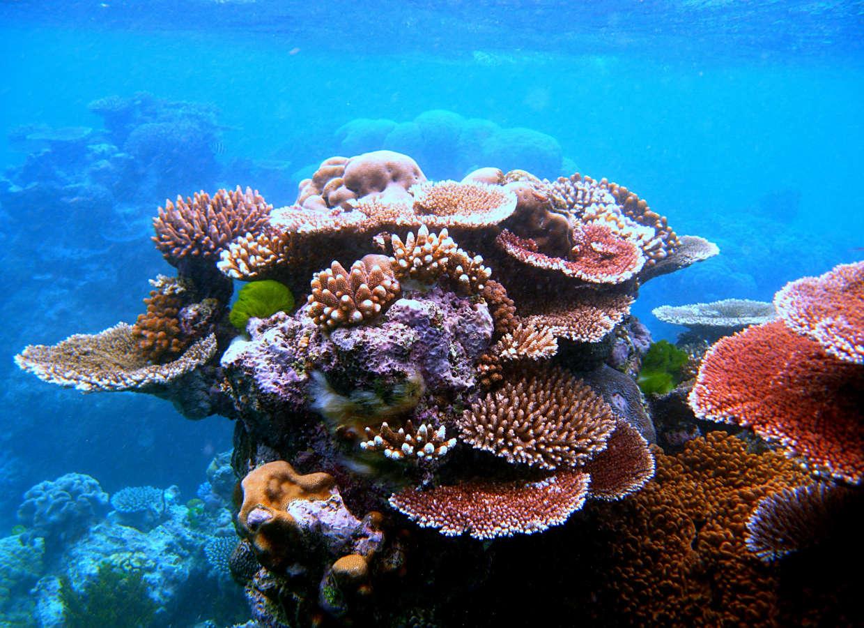 Des scientifiques font la lumière sur la photosynthèse des coraux