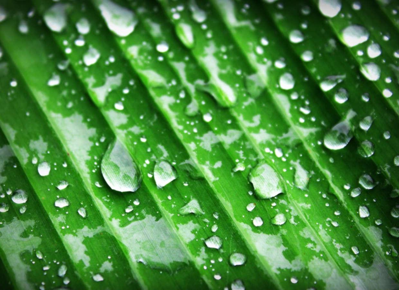 Quel est le rôle de l'eau dans la photosynthèse?